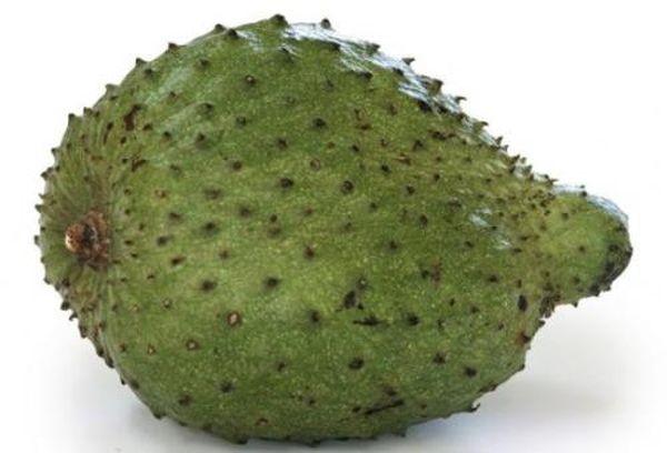 biljka-graviola
